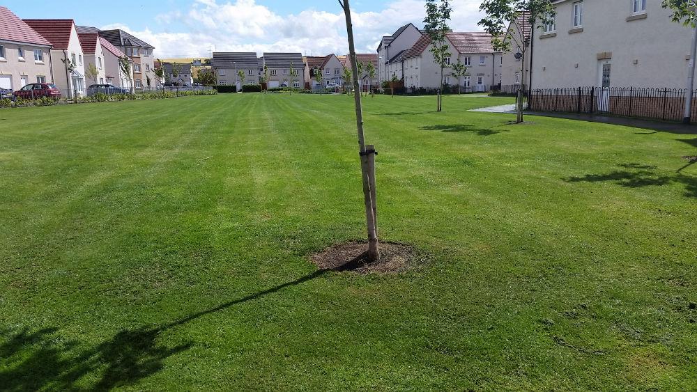 Landscaping Grounds Maintenance Edinburgh-21