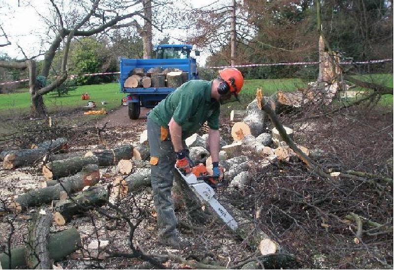 Tree Surgeons Edinburgh