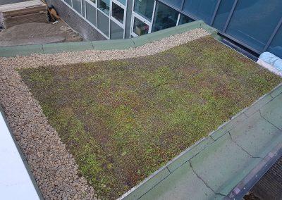 Green Roofs Edinburgh Scotland 19
