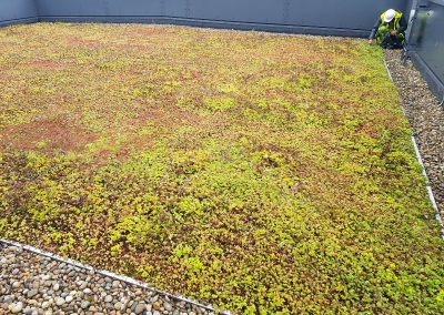 Green Roofs Edinburgh Scotland 21