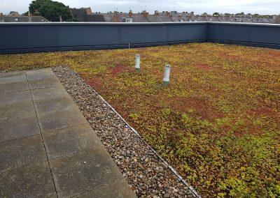 Green Roofs Edinburgh Scotland 22