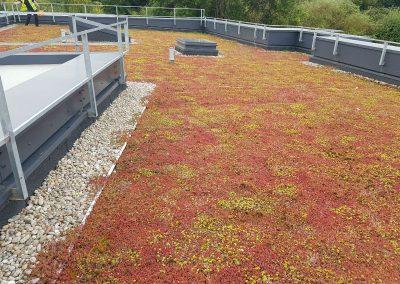 Green Roofs Edinburgh Scotland 23