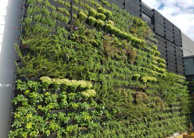 Vertical Living Walls Edinburgh Scotland 02