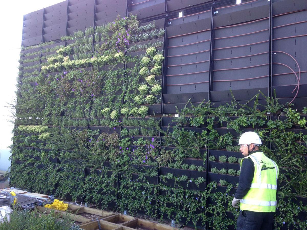 Living Walls Edinburgh By Urban Utopia Landscapes Ltd